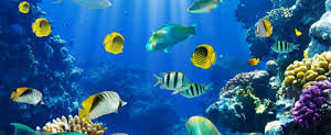 peces agua salada