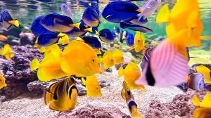 peces anodromos y catadromos